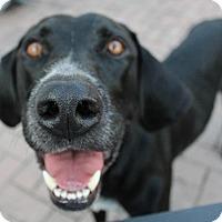 Adopt A Pet :: Denver - Lewisville, IN