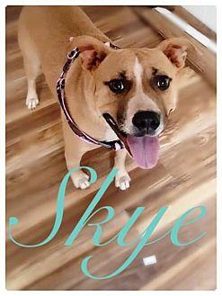 Terrier (Unknown Type, Medium) Mix Dog for adoption in Charlotte, North Carolina - SKYE