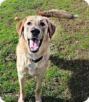 Anatolian Shepherd Mix Dog for adoption in Shreveport, Louisiana - Martha
