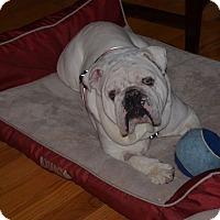 Adopt A Pet :: Mojo - Columbus, OH