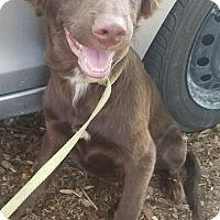 Adopt A Pet :: Duke - Chiefland, FL