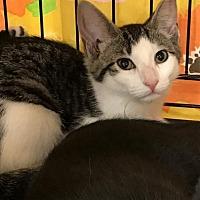 Adopt A Pet :: Skylar - Furlong, PA