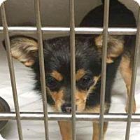 Adopt A Pet :: Eva - Boulder, CO
