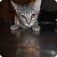 Adopt A Pet :: *KAI - Long Beach, CA