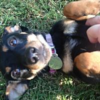Adopt A Pet :: Bonnie - Huntsville, AL