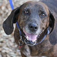 Adopt A Pet :: Emma - Fillmore, CA