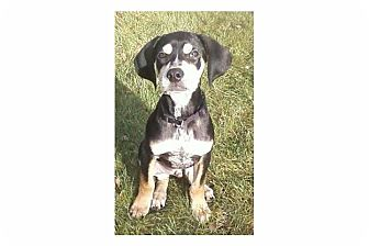 Hound (Unknown Type) Mix Puppy for adoption in Pompton Lakes, New Jersey - Boomer-HOLD