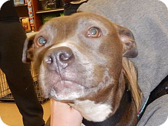 Pit Bull Terrier Mix Dog for adoption in Richmond, Virginia - Skylar
