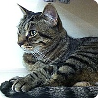 Adopt A Pet :: Radar - Riverhead, NY