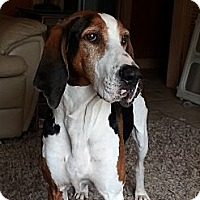 Adopt A Pet :: Presley - Rossford, OH