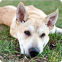 Adopt A Pet :: Merelle - Foster, RI