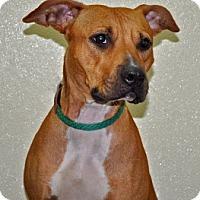Adopt A Pet :: Faith - Port Washington, NY