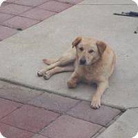 Adopt A Pet :: Fido - Paintsville, KY