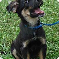 Adopt A Pet :: Camo - Erwin, TN