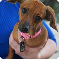 Adopt A Pet :: Piggly - Holly Springs, NC