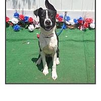 Adopt A Pet :: JACKIE - Marietta, GA