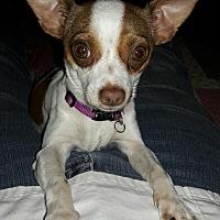Adopt A Pet :: Skoshi - Salem, OR