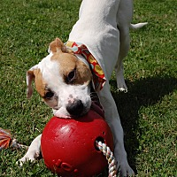 Adopt A Pet :: Jim Beam - Wilmington, DE