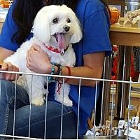 Adopt A Pet :: Barley - Scottsdale, AZ