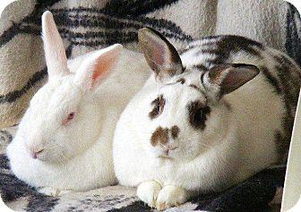 Rhinelander Mix for adoption in Williston, Florida - George & Gracie