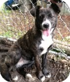 Border Collie/Terrier (Unknown Type, Medium) Mix Dog for adoption in Coeburn, Virginia - Molly