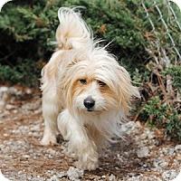 Adopt A Pet :: Harry Pawter - Athens, GA
