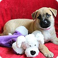 Adopt A Pet :: HERA - Loxahatchee, FL