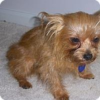 Adopt A Pet :: Harry - Jacksonville, FL