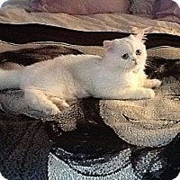 Adopt A Pet :: Zooey - Beverly Hills, CA