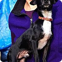 Adopt A Pet :: Max tiny boy - Sacramento, CA