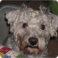 Adopt A Pet :: Mario - Palmyra, WI