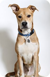 Shepherd (Unknown Type)/Hound (Unknown Type) Mix Dog for adoption in Truckee, California - LeRoy