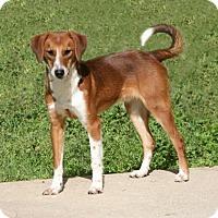 Adopt A Pet :: Happy - Lufkin, TX