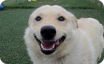 Shepherd (Unknown Type) Mix Dog for adoption in Lloydminster, Alberta - Colbert