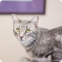 Adopt A Pet :: Cadet - Fountain Hills, AZ