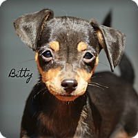 Adopt A Pet :: Bitty~adopted! - Glastonbury, CT