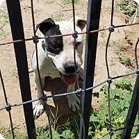 Adopt A Pet :: Zelda - Tonopah, AZ