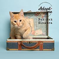 Adopt A Pet :: Fur-Ank Sinatra - Pearland, TX