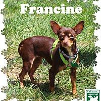 Adopt A Pet :: Francine - Fallston, MD