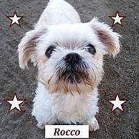 Adopt A Pet :: Rocco - El Cajon, CA