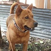 Adopt A Pet :: Leo - Olympia, WA