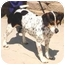 Photo 1 - Beagle Mix Dog for adoption in Tracy, California - bosley