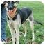 Photo 1 - German Shepherd Dog/Anatolian Shepherd Mix Dog for adoption in Sacramento, California - Bella superrrr