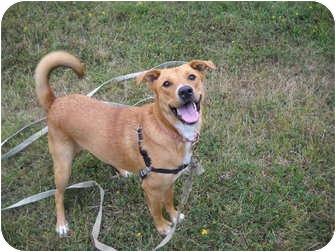 Shepherd (Unknown Type) Mix Dog for adoption in Tillamook, Oregon - Bella