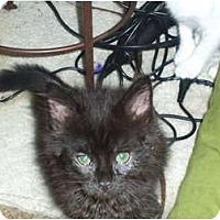 Adopt A Pet :: Jacob - Mobile, AL