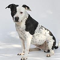 Adopt A Pet :: Miha - Los Angeles, CA