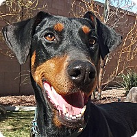 Adopt A Pet :: Tiffany - Las Vegas, NV