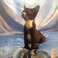 Adopt A Pet :: Jimmy John - Sarasota, FL