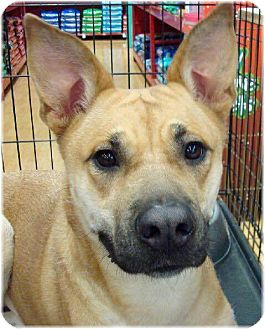 Shepherd (Unknown Type) Mix Dog for adoption in Las Vegas, Nevada - Gretta