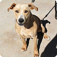Adopt A Pet :: Millie - Fort Madison, IA